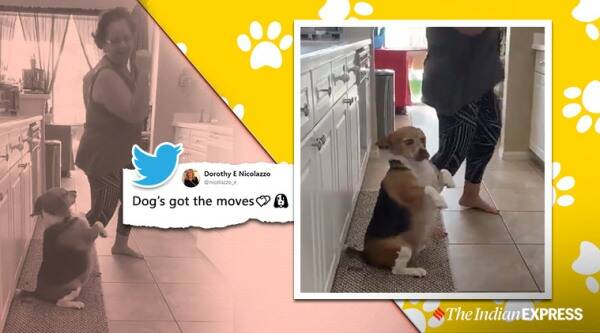 Dog dancing, dog danced to Puerto Rican music, Dog videos, Trending, Indian Express news