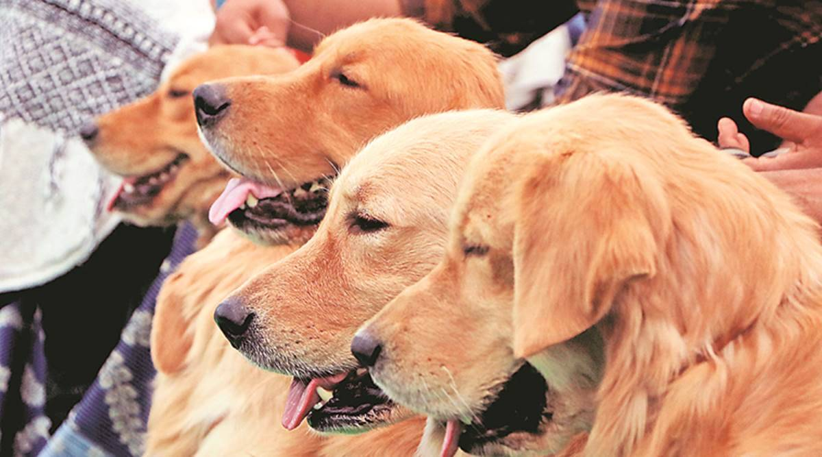 coronavirus, coronavirus Hong Kong, coronavirus in Hong Kong pet dogs, coronavirus Hong Kong pet dog, coronavirus death toll, World news, Indian Express