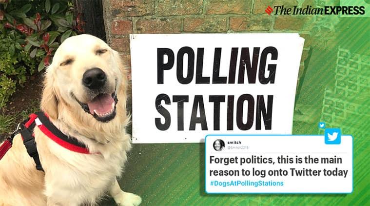 uk elections, Brexit, #dogsatpollingstations, UK voting, uk voting tweets, Boris Johnson, Boris Johnson dog,
