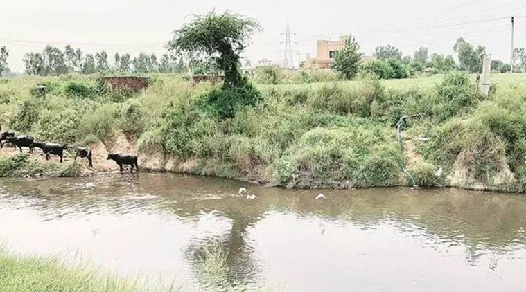 Kala Sanghia drain: Industries rush to plug effluent outlets ahead of NGT panel chairman's visit