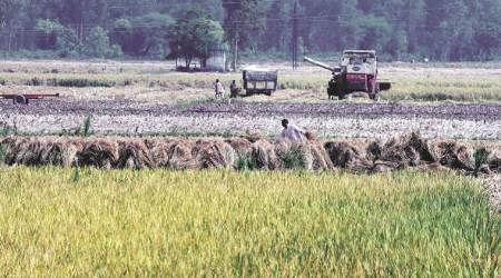india agriculture sector, agriculture crisis, agriculture problems in india, india farmers, farmers crisis, onion price, food inflation