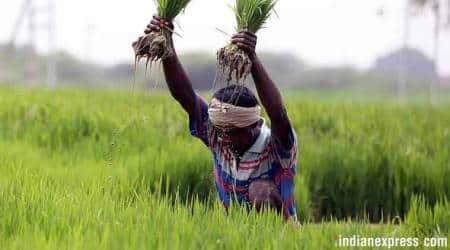 Maharashtra loan waiver, Maharashtra farmers, Maharashtra news, Devendra Fadnavis loan waiver,