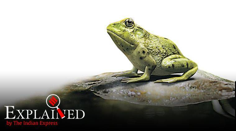 FrogPhone, what is This word means: FrogPhone , frog habitats , indian express explained