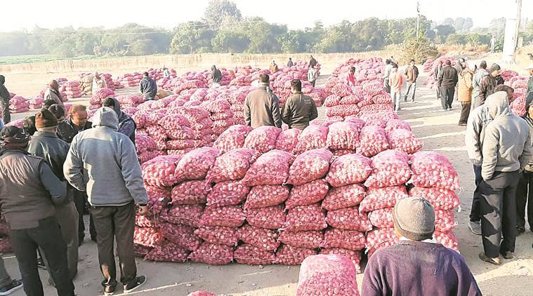 onion prices. india onion prices, onion export, india govt onion expert, indian express