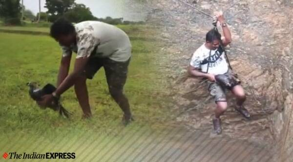 man rescues peacock from snake infested well, snakes, peacock rescue from well, peacock rescue viral video, man climbs down snake infested well to rescue peacock, trending, indian express, indian express news