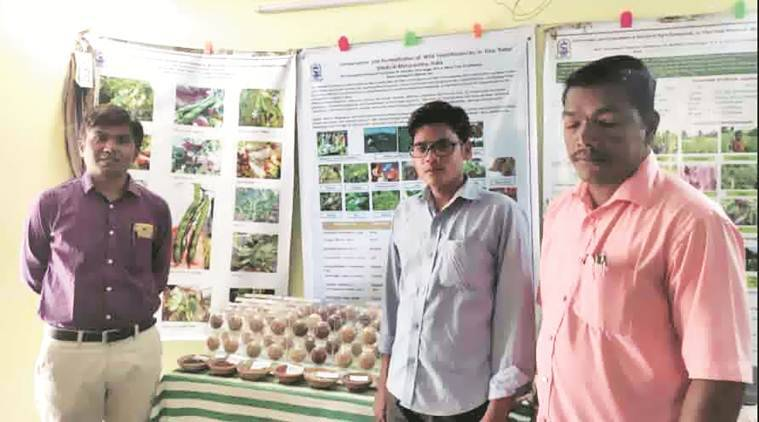 BAIF Development and Research Foundation, BAIF Development and Research Foundation rice conservation, farming monk, pune city news, rice conservation, Maharashtra Gene Bank Project
