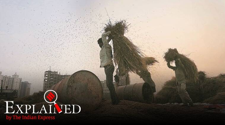 Explained: Why Basmati export has come to a standstill in Punjab?