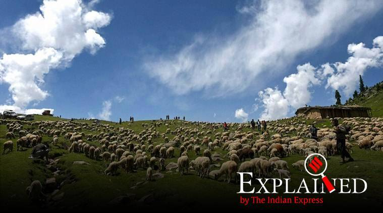 Why New Zealand is trying to breed sheep that will emit less methane