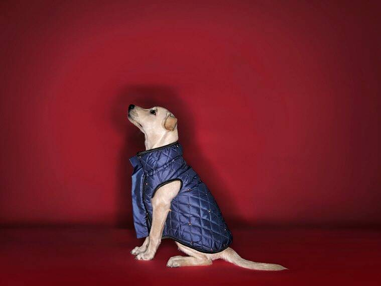 pet care, pet wear, shivan and narresh, shivan and narresh pet wear
