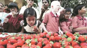 Strawberries arrive in Pune amid falling output and quality