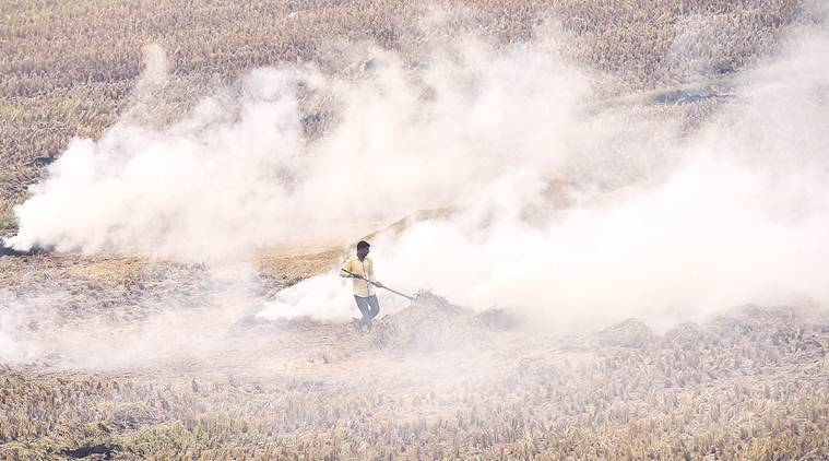 Punjab farm fires acreage up by 4%: Stubble put to fire in 61% of total area under paddy
