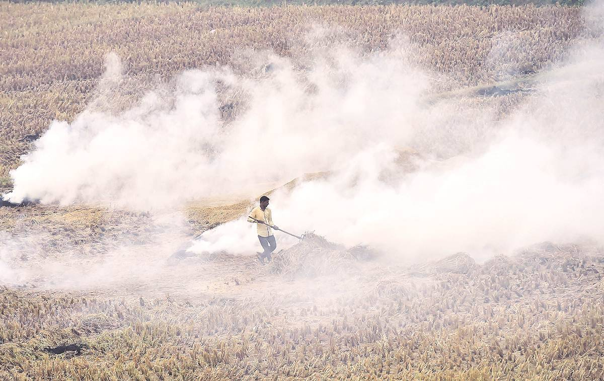 Delhi pollution, Paddy stubble burning Delhi, Delhi EPCA paddy stubble burning, delhi city news