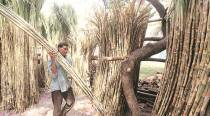 Sugar mills yet to clear Rs 2,400 crore pending dues of last two seasons to cane growers: Government