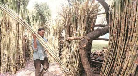 sugar industry, maharashtra sugar industry, maharashtra sugarcane farmers, pune, pune news, latest news