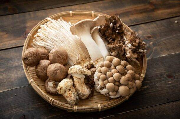 Types of mushrooms, edible mushrooms, 13 types of mushrooms that are edible