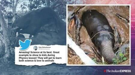 Elephant rescue, Archimedes principle, Jharkhand forest department, Animal rescue video, Trending, Indian Express news