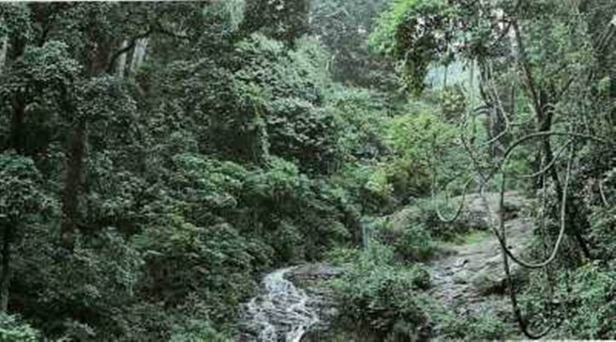 Goa forest cover, Goa private forests, NGT, NGT order Goa forests, NGT private forest in Goa, Goa news, Goa Foundation, indian express