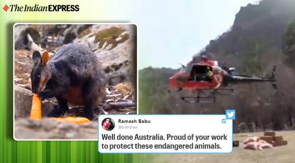 Vegetables airdropped for animals who survived bushfire in Australia, Australian, Australian bushfire, Operation Rock Wallaby, New South Wales (NSW) Minister for Energy and Environment, Trending Indian Express news