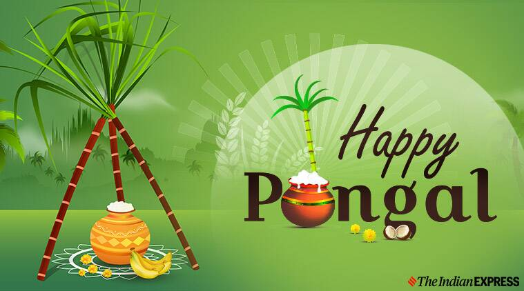Happy Pongal Images 2020: Wishes Images, Quotes, Status ...