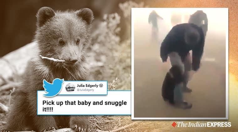 Bear rescued from a forest fire, Bear cub hugs human, Forest fire, Viral video, Trending, Indian Express news