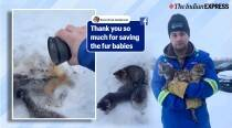Canadian man rescues three frozen kittens by pouring warm coffee on them