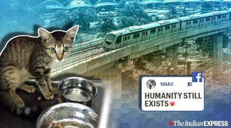 Cat rescued from metro Piller, Cat rescue mission, Kochi metro, Kerala news, Trending, Indian Express news.
