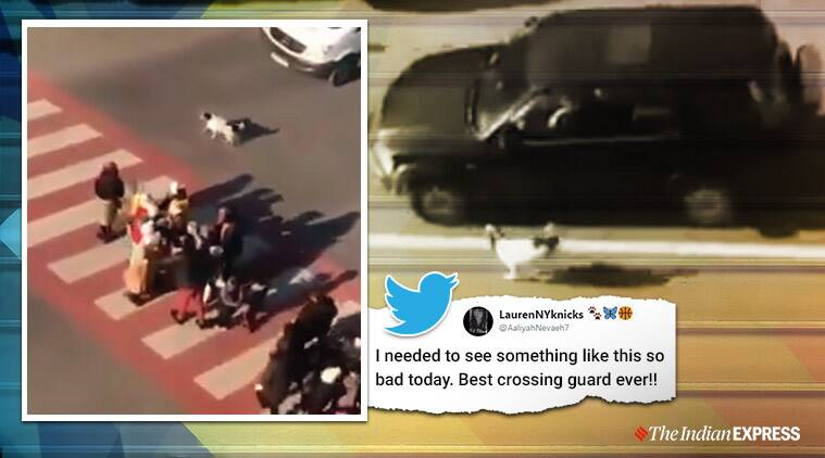 dog, dog viral video, dog helps children cross road, Soviet Republic of Georgia, zebra crossing, viral video,