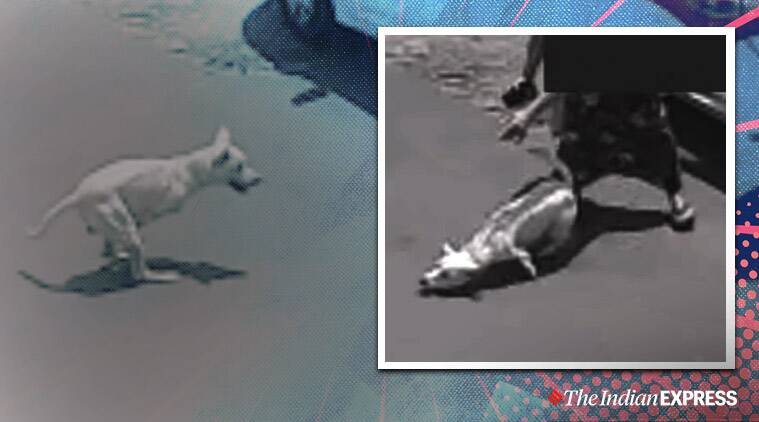 Woman abandons dog, Woman abandons disabled dog, Disabled dog abandoned in Portugal, Viral video, Trending, Indian Express news