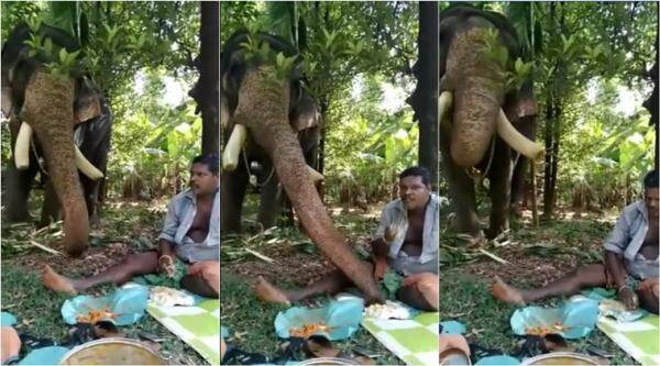 elephant sharing meal with man, elephant eating out of man's plate, elephant stealing man food, viral videos, cute animal videos, kerala elephant videos, indian express