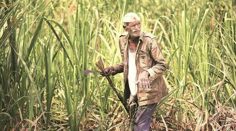 Crop loan above Rs 2 lakh: Govt sets up panel to recommend schemes