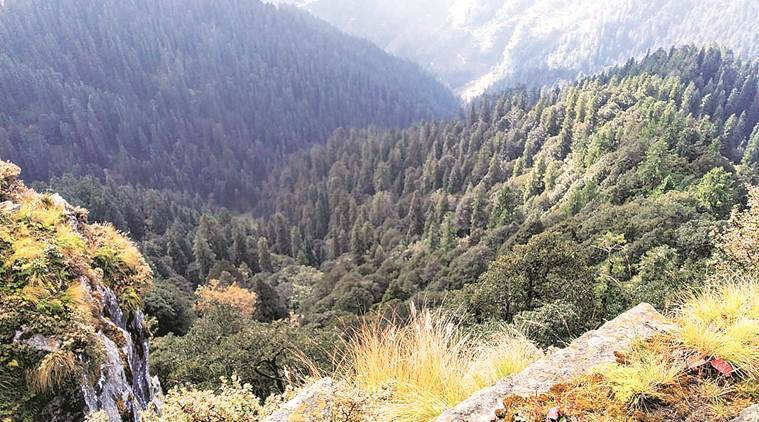 Himachal Pradesh: In 22 yrs, Chir Pine density down by 72% in Chamba