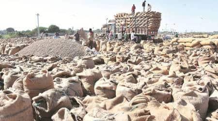 Gujarat, Gujarat farmers, Gujarat groundnut farmers, quality of groundnuts, average quality ground nuts, groundnut crop, coronavirus, coronavirus cure, coronavirus prevention, government procuring groundnut, indian express