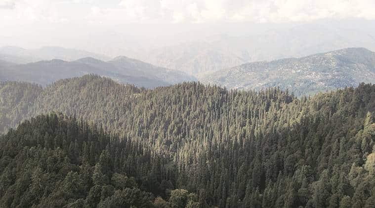 forest in himachal pradesh, Kinnaur forest, decline in forest area in himachal pradesh, decline in forest, forest cover in himachal pradesh, india news, indian express