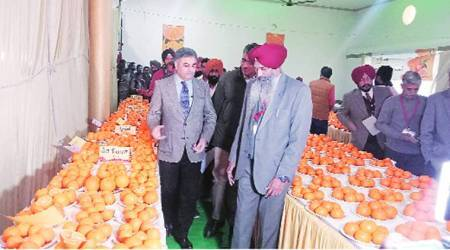 Punjab farmers urged to transition to horticulture, grow more fruit