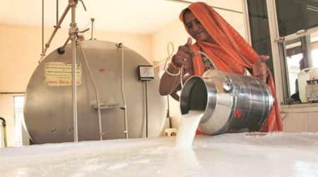 milk, milk powder, butter, skimmed milk powder, milk dairies, nddb, india news, indian express