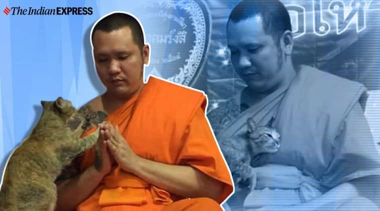 Monk and cat, Bangkok monk and cat during new yer prayer, Bangkok, Trending, Indian Express news