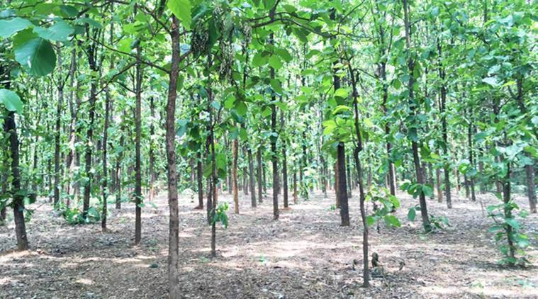 private plantations, Environment ministry, private plantations scheme Supreme Court, Green Credit Scheme, indian express