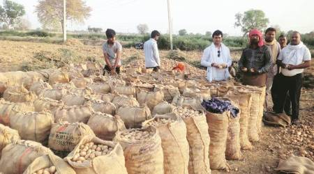 Ahmedabad: Global Potato Conclave to discuss patent issues and contract farming