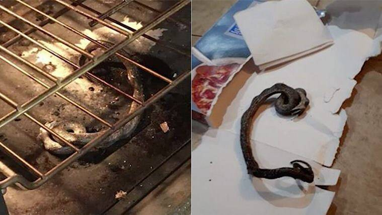 snake in the oven, snake in kicthen, snake viral videos, family cook snake while baking pizza, viral news, odd news, indian express