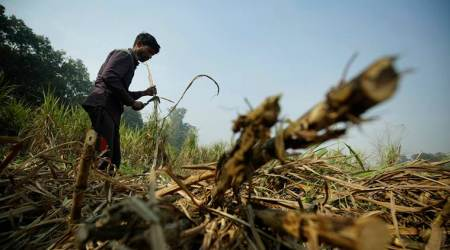 India lockdown, coronavirus outbreak, cane harvesters, stranded farmers, Pune news, indian express news