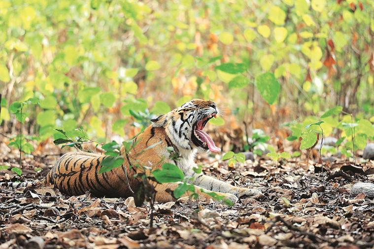 Akash Das, delhi art gallery, wildlife photography, All India Fine Arts & Crafts, AIFACS, india news, indian express news