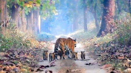 Arunachal Pradesh: Road through tiger reserve temporarily called off