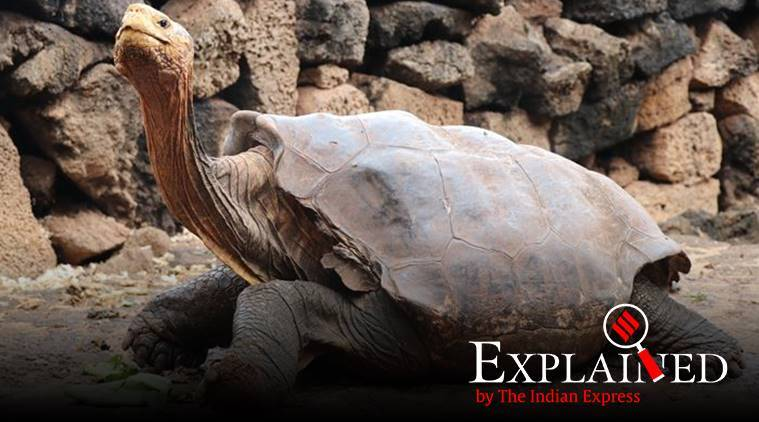 Diego tortoise, who is Diego the tortoise, Galapagos National Park, Chelonoidis hoodensis, indian express, indian express explained