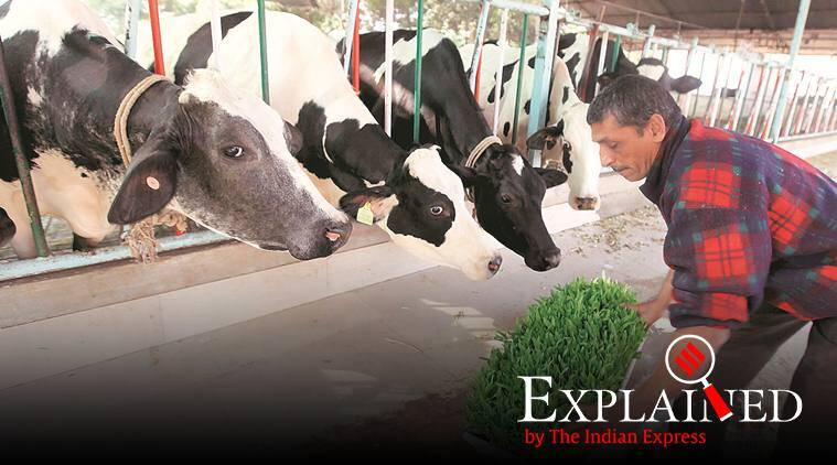In Budget itself, signals that a major India-US dairy deal is unlikely