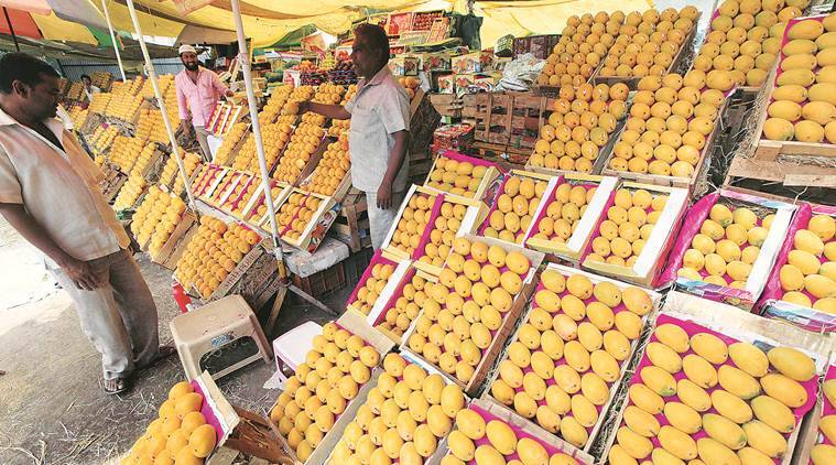 India lockdown, coronavirus outbreak, food delivery platforms, mango farmers, Mango season, export chain, Maharashtra news, indian express news