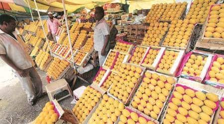 India lockdown, coronavirus outbreak, food delivery platforms, mango farmers, Mango season, export chain, Maharashtra news, indian express news