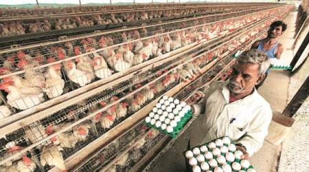 Pune police files complaint against social media posts linking coronavirus with poultry