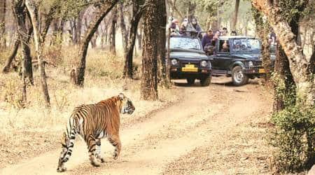 wildlife tourism, Forest department, Nagpur news, Maharashtra news, Indian express news