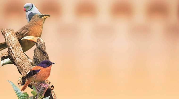Maharashtra bird species, Western Ghats bird species, India's Bird 2020 report, mumbai news, maharashtra news, indian express news