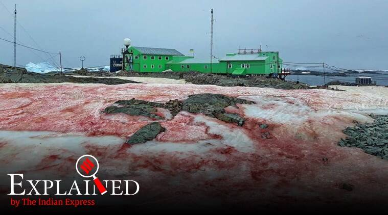 red snow antarctica, blood red snow, watermelon snow, snow turning red algae, melting glaciers, climate change, ice albedo, express explained, indian express